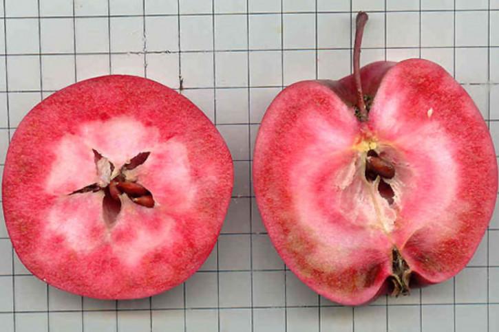 "Rotfleischige Äpfel ""LILLA SEEMIK"""