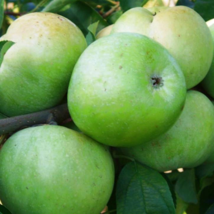 """Apfel """"Simirenko"""" """"Limonka"""""""