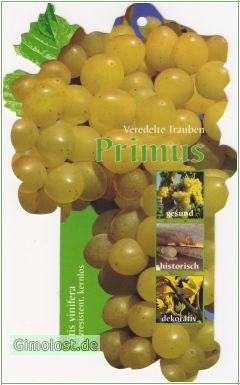 """Weinrebe """"Primus"""""""